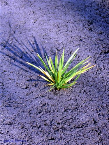 Gras im Asphalt