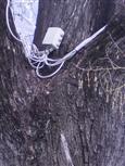 Der verkabelte Baum