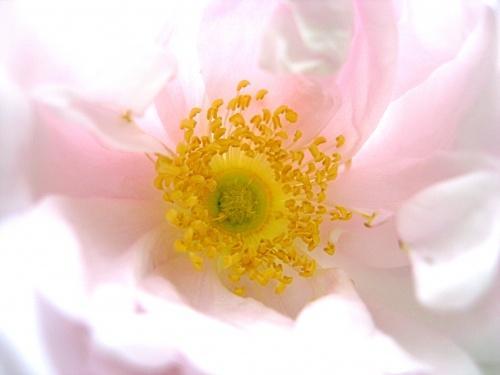 In Blüte ertrunken