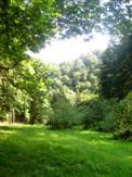 Waldinsel des Glücks