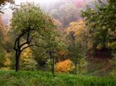 Waldstreuobstwiese im Herbstkleid