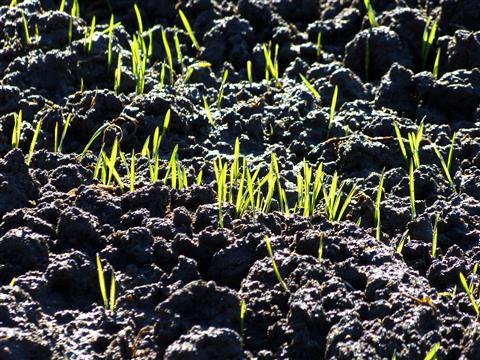 Die Saat geht auf-Grundlage unserer Ernährung