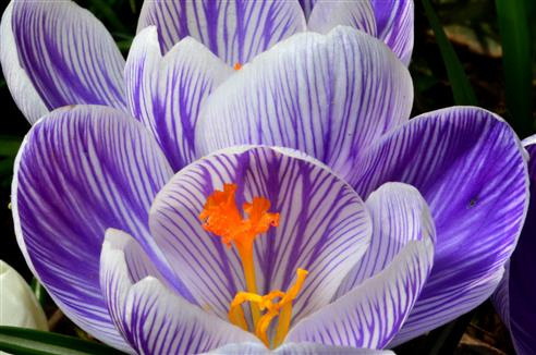 Frühlingsfarbenpracht
