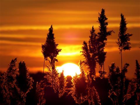 Abendsonne an der Altmühl