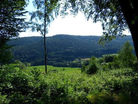 Odenwald bei Zittenfelden