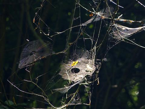 Spinnenkunst im Wald