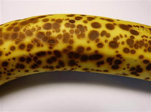 Leoparden-Banane