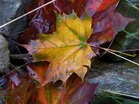 nasser Herbst