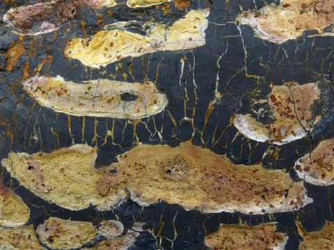 Aleurolit als Schauobjekt in Gesteinssammlung