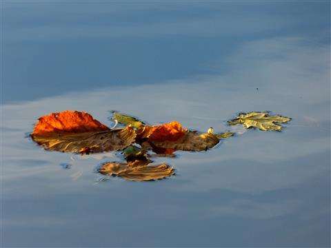 Blätterinsel