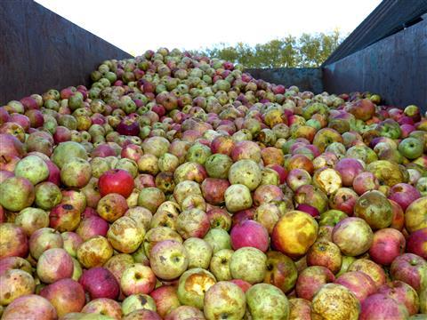 Rohstoff Mostäpfel