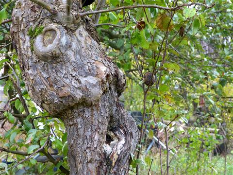 was sagst du uns alter Baum