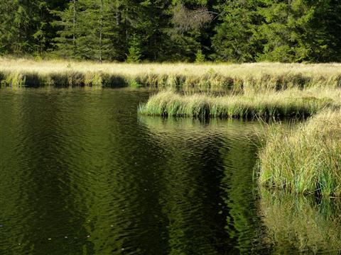 Fichtelsee Nordufer
