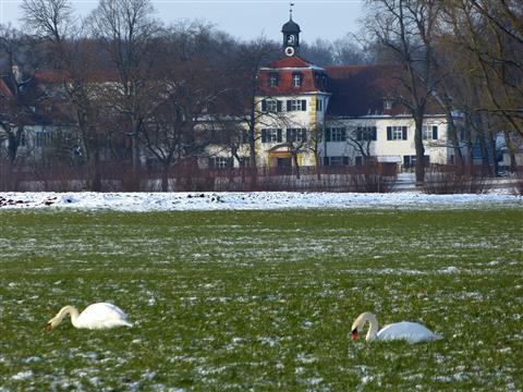 Weisse Schwäne vor Weissem Schloss bei Triesdorf