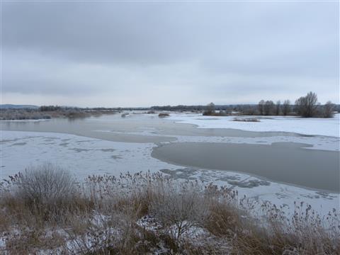Altmühlsee Vogelinsel Winter Fernblick