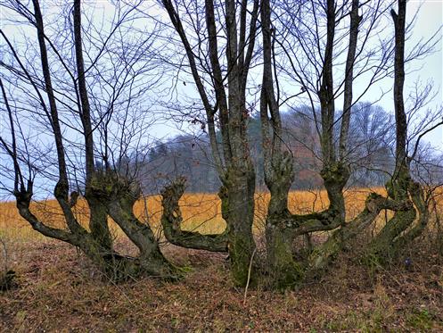 Baum-Kandelaber