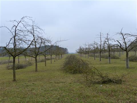 Triesdorf Pomoretum Obstbaumschnitt