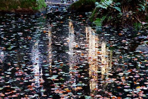 Spiegelung im Luisenburgteich