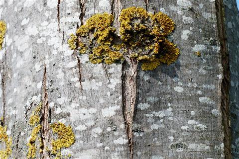 Baum am Baum