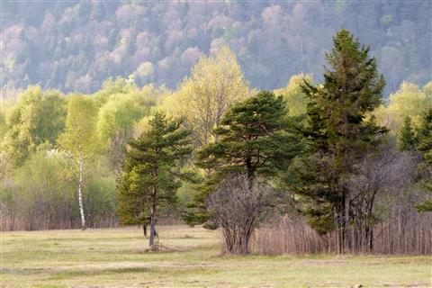 Baumbestand im Naturschutzgebiet bei Interlaken