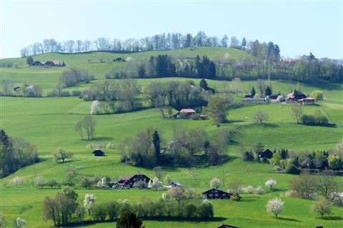 blühende Schweiz bei Amsoldingen