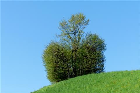 Hügelkrone am Jakobsweg in der Schweiz
