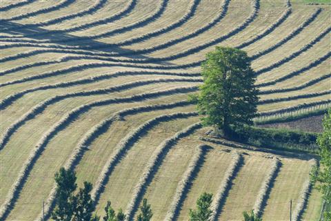 Baum in gemähter Wiese in Frankreich