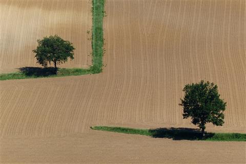 zwei Bäume in einem Feld in Frankreich