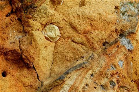 Steineinschluss