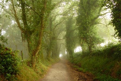 Zauberhafte Morgenstimmung am Jakobsweg in Spanien