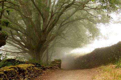 Der Camino im Morgennebel