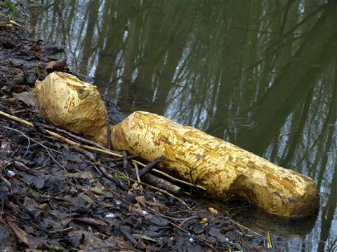Bildhauer Biber: Holzpuppe