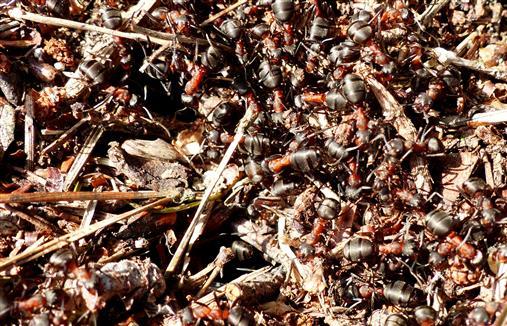 Ameisenstaat erwacht