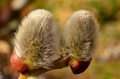 Kuschelkätzchen
