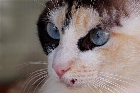 Blaue Augen und Schnurrbart