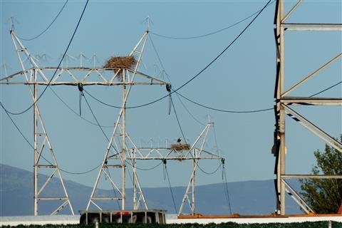 Storchennester mit eigener Stromversorgung