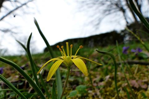Wald-Goldstern