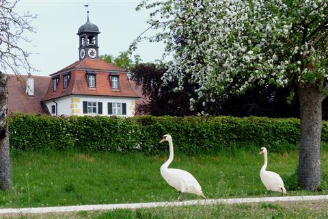Schwanenspaziergang am Weißen Schloss in Triesdorf