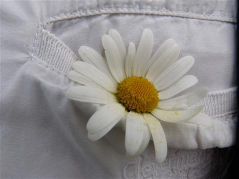 Einsteckblümchen für Romantiker