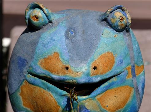 Flugloch-in der Höhle des Frosches