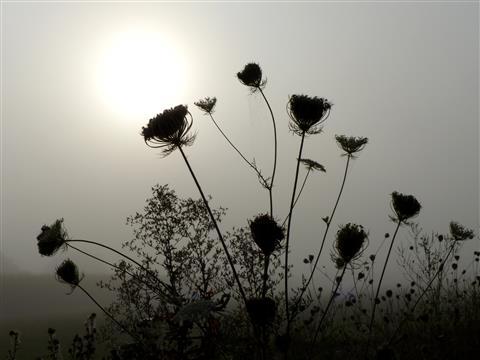 Morgenstund mit Sonnenrund