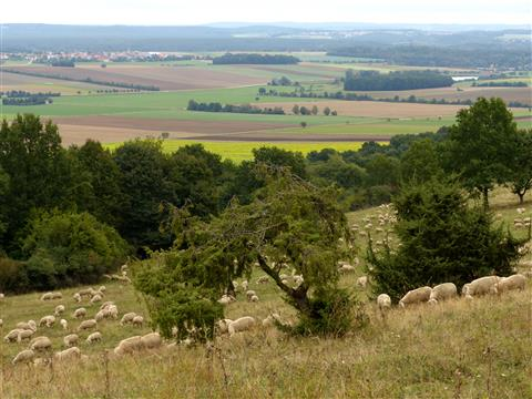 Landschaftspfleger am Hesselberg