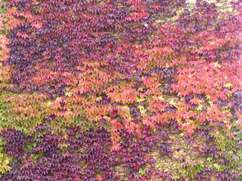 Herbstwandteppich