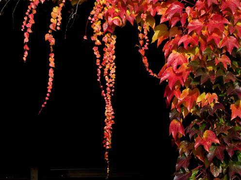 Herbstgirlanden