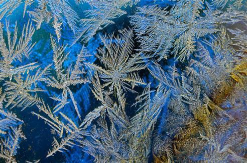 über Nacht gewachsene Eisblumen