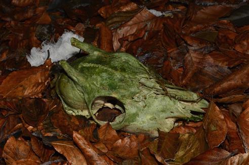 gestorben im Wald