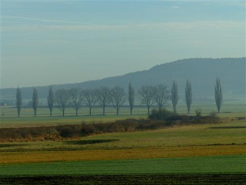 Bäume im Altmühlgrund