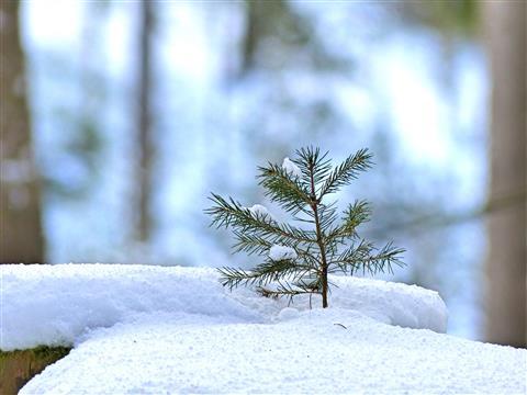 Nachwuchs im Schnee