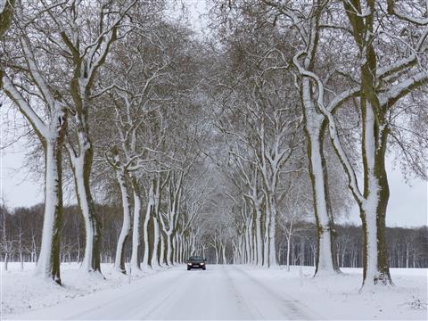 Triesdorf Platanenallee im Schnee