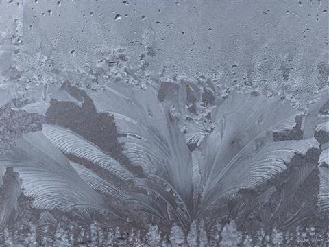 Eisblumenpalme